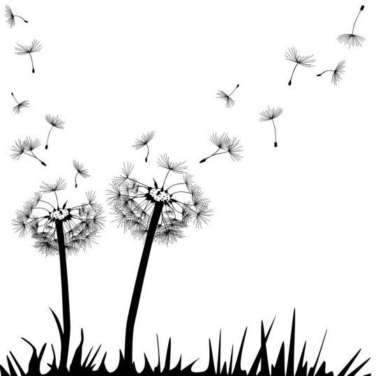 Dandelion black vector illustration 03
