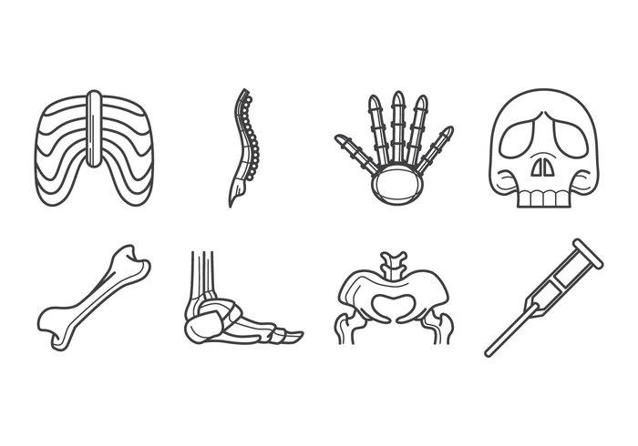 Free Human Bone Icon Vector