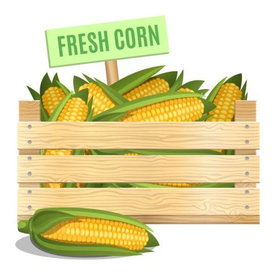 Fresh corn poster vector design