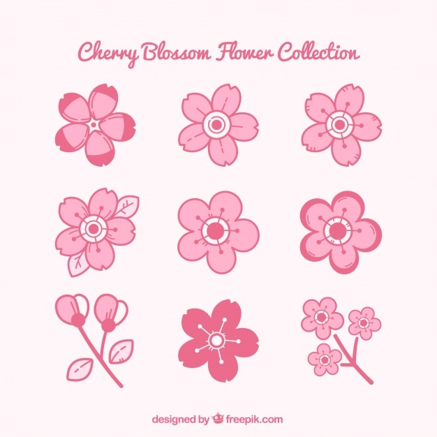 Pink collection of cherry blossoms