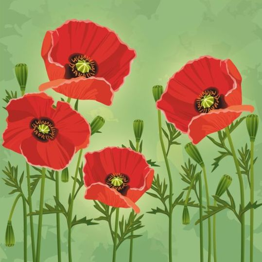 Poppies flower with green grunge background vector