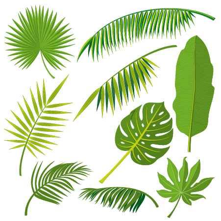 Tropical plant leaves vector set 02
