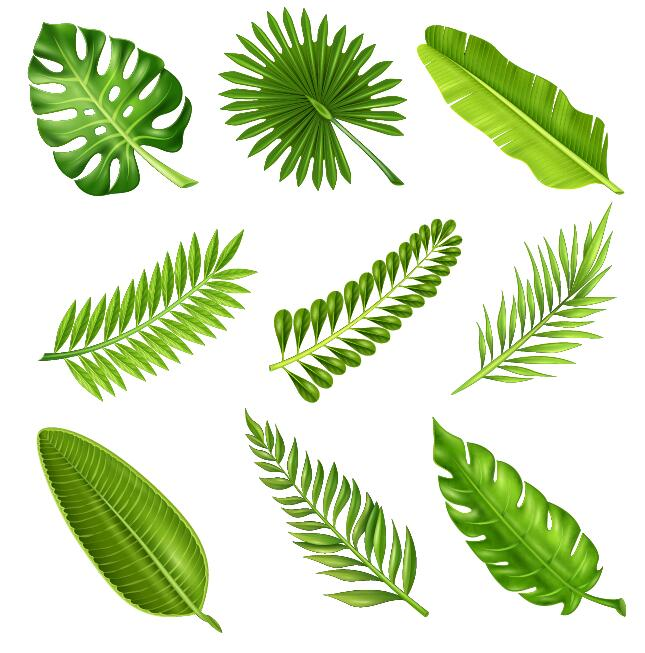Tropical plant leaves vector set 01